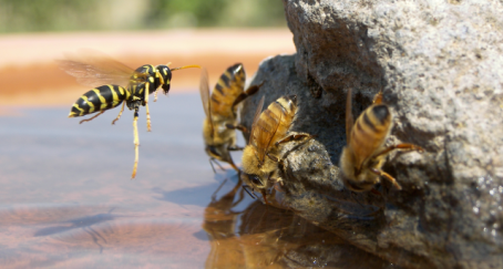 Wasp and Honeybees