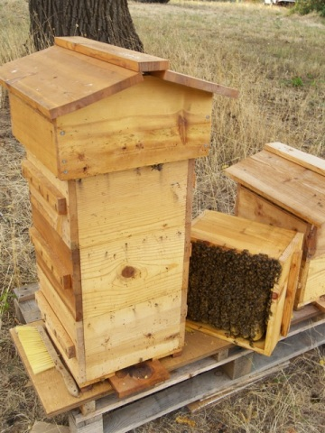 Warre Hive with the Roof Replaced