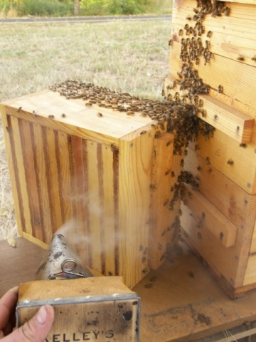 Using the Smoker to Clear the Warre Hive Box