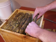Removing a Honeycomb from the Hive Box