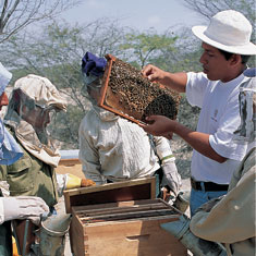 Gift of Bees from Heifer